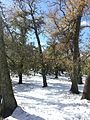 IFRANE SNOW.jpg