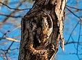 I Hit the Squirrel Jackpot... - Flickr - John Brighenti.jpg
