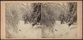 Ice and snow scene in the Catskills, by E. & H.T. Anthony (Firm) 11.png
