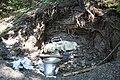Illegal landfill in natural monumet Nad zavodistem (1).JPG