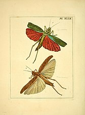 Illustrations of natural history (Pl. XLIX) (8119069395).jpg