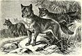 """Image from page 80 of """"All about animals. Facts, stories and anecdotes"""" (1900).jpg"""