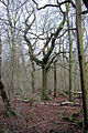 In Fifty Acre Wood - geograph.org.uk - 314366.jpg