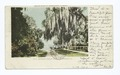 Indian River, Rockledge, Fla (NYPL b12647398-62382).tiff