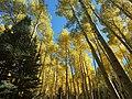 Inner Basin Trail (29994327975).jpg