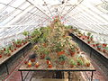 Interior view - Talcott Greenhouse - Mount Holyoke College - DSC04538.JPG