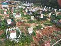 Israeli pet Cemetery.jpg