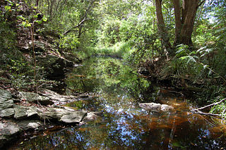 Ithaca Creek river in Australia