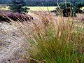 Itterbecker Heide in September.jpg