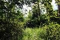 Japan - Fujisan - Nature 2.jpg
