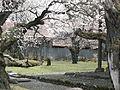 Japanese Cherry Blossom -桜- (3431224914).jpg