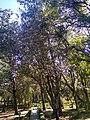 Jardín botánico de Tlaxcala 08.jpg