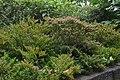 Jardim Botânico da Madeira DSC 0216 (14513394958).jpg