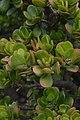 Jardim Botânico da Madeira DSC 0314 (14699668812).jpg