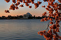Jefferson Memorial at dawn.JPG