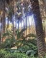 Jes.photos.jardin anglais 001.jpg