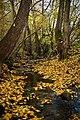 Jeseň - panoramio - Marian Lacko.jpg