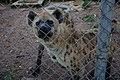 Jos zoological garden9.jpg