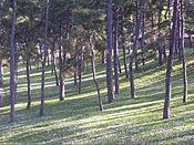 Kalemegdan trees.jpg