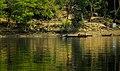 Kaptai Lake (41120562271).jpg