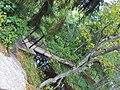 Keila-Joa bridge - panoramio.jpg