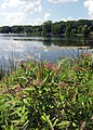 Keller Lake - Maplewood, MN - panoramio.jpg
