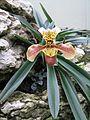 Kew Gardens 0452.JPG