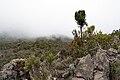 Kilimanjaro vegetation 2.jpg