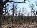 Kings Mountain National Military Park - South Carolina (8558909020) (2).jpg