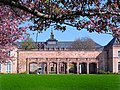 Kirschblüte vorm Grassimuseum.jpg