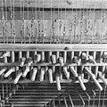 Klavier carillon - Enkhuizen - 20070487 - RCE.jpg