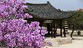 Korea Palace Spring Flowers 03.jpg