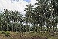 Kunak Sabah Mostyn-Oil-Palm-Museum-05.jpg