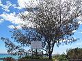 Kwinana Beach coastal bush tucker trail.jpg