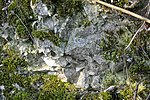 LSG Calenberger Leinetal - Alt Calenberg - Kreide-Gestein (1).jpg