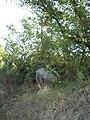 La quercia nella roccia - panoramio.jpg