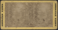 Lake George. (View in forest.), from Robert N. Dennis collection of stereoscopic views.png