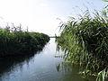 Lake Tisza 3.jpg