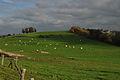 Landscape of Fraiture (Sprimont) - Wallonia - Belgium.jpg