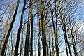 Landschaftsschutzgebiet Vorholzer Bergland - Heidelbeerenberg (22).JPG