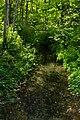 Langenauer Ried -Wald Fluss.jpg
