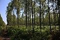 Lasy Łączańskie - panoramio (5).jpg