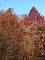 Later Autumn Window series - Autumn's Impression.jpg