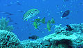 Layang-Layang diving28.jpg