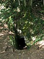 Le Trou du Loup (Wolfloch) SENTHEIM 68290 - panoramio.jpg