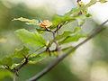 Leaf (detail) (8105234882).jpg