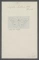 Libythea - Print - Iconographia Zoologica - Special Collections University of Amsterdam - UBAINV0274 049 17 0002.tif
