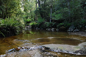 Protected areas of Tasmania - Image: Liffey river through the rainforest