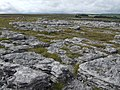 Limestone pavement on Orton Moor - geograph.org.uk - 541371.jpg