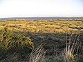 Lindisfarne National Nature Reserve - geograph.org.uk - 312381.jpg
